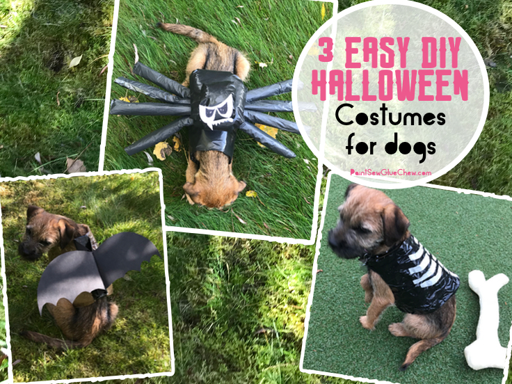 Easy DIY Halloween Costumes for Dogs